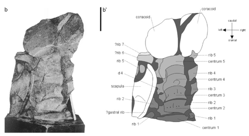 Monster of Aramberri vertebrae